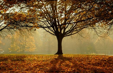 an autumn day morning in the park photo
