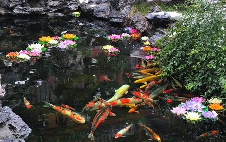 garden pond:  Chinese Koi pond in Shanghai China