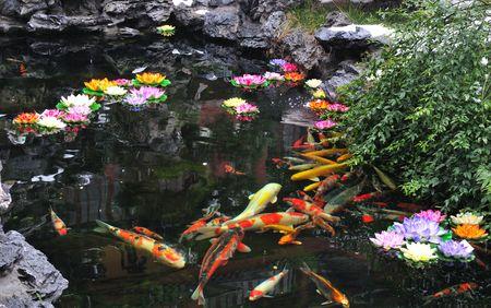 Chinese Koi pond in Shanghai China