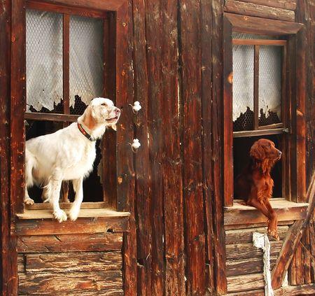 trusty: Two dogs in a shack in Turkish village near Ankara Stock Photo