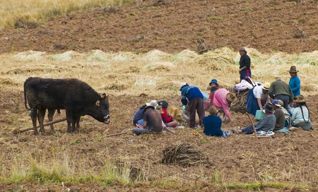 Vallée sacrée, Pérou - 26 mai: Groupe de personnes péruvienne dans une récolte de pommes de terre dans les Andes du Pérou Banque d'images - 10591989