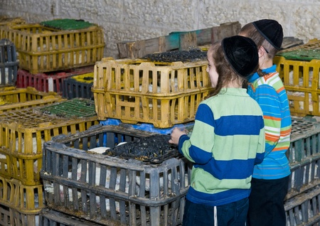 exprassion: JERUSALEM - OCT 06 : An ultra Orthodox Jewish boys near a cages with chickens use for the Kapparot ceremony held in Jerusalem Israel on October 06 2011