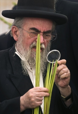 succot: JERUSALEM - OCTOBER 10 2011 : An ultra-orthodox Jewish man inspects a Lulav