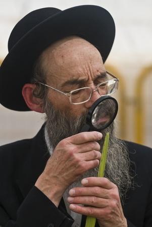 aravah: JJERUSALEM - OCTOBER 10 2011 : An ultra-orthodox Jewish man inspects a Lulav