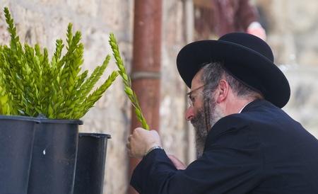 JERUSALEM - OCTOBER 10 2011 : An ultra-orthodox Jewish man inspects an Hadas Stock Photo - 10839132