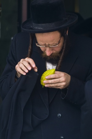 JERUSALEM - OCTOBER 10 2011 : An ultra-orthodox Jewish man inspects an Etrog Stock Photo - 10839126
