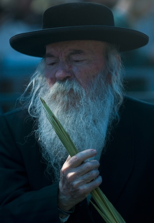 JERUSALEM - OCTOBER 10 2011 : An ultra-orthodox Jewish man inspects a Lulav Stock Photo - 10839133