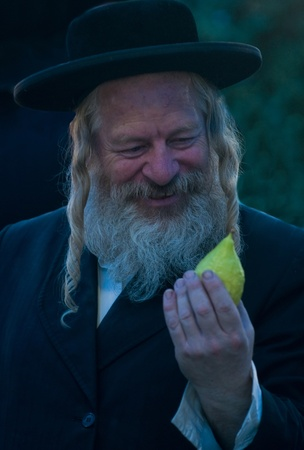 JERUSALEM - OCTOBER 10 2011 : An ultra-orthodox Jewish man inspects an Etrog Stock Photo - 10839125