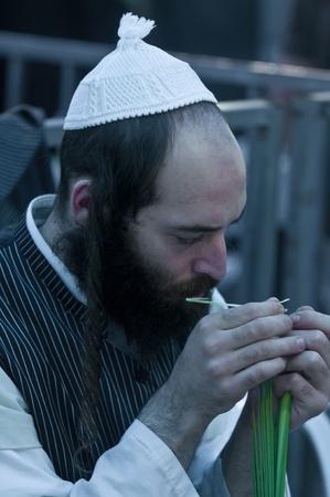 JERUSALEM - OCTOBER 10 2011 : An ultra-orthodox Jewish man inspects a Lulav Stock Photo - 10839145