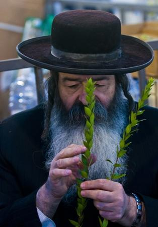 aravah: JERUSALEM - OCTOBER 10 2011 : An ultra-orthodox Jewish man inspects an Hadas