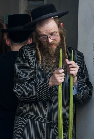JERUSALEM - OCTOBER 10 2011 : An ultra-orthodox Jewish man inspects a Lulav Stock Photo - 10839121