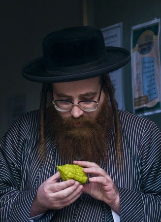 succot: JERUSALEM - OCTOBER 10 2011 : An ultra-orthodox Jewish man inspects an Etrog