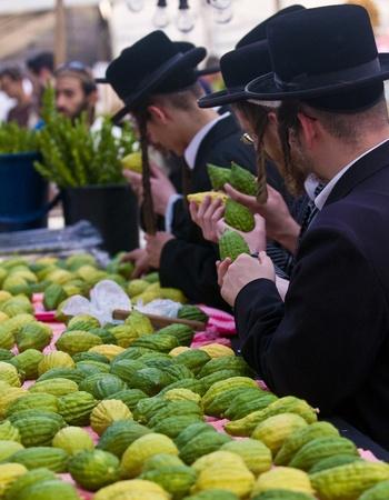 エルサレム - 2011 年 10 月 10 日: 超正統派ユダヤ人の男性、Etrog を検査 報道画像