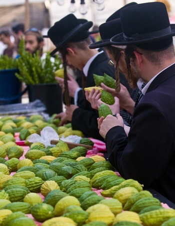 succot: JERUSALEM - OCTOBER 10 2011 : An ultra-orthodox Jewish men inspects an Etrog Editorial