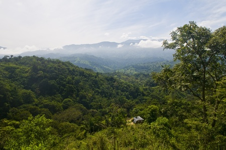 View over Colombian rain forest in Tayrona park  photo