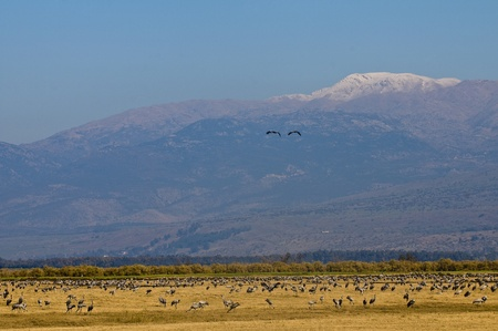 bird of israel: View of Mount Hermon in North of Israel
