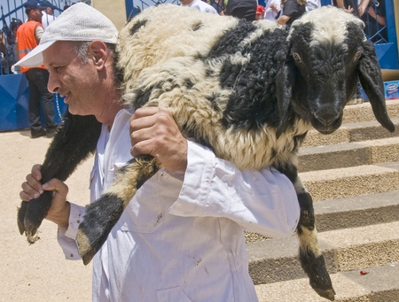 NABLUS , PALESTINIAN TERRITORY - MAY 04 : Members of the ancient Samaritan community carry a sheep to the slaughter during the traditional Passover sacrifice in Mount Gerizim near the west bank city of Nablus on May 04 2012