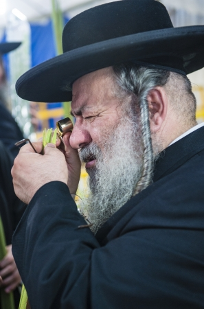 raligion: JERUSALEM - SEP 28 : Ultra Orthodox Jewish man inspects a Lulav in the Four spesies market in Jerusalem Israel on September 28 2012 , Lulav is one of the Four spesies used during the celebration of Sukot Editorial