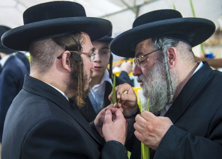 raligion: JERUSALEM - SEP 28 : Orthodox Jewish men inspects a Lulav in the Four spesies market in Jerusalem Israel on September 28 2012 , Lulav is one of the Four spesies used during the celebration of Sukot