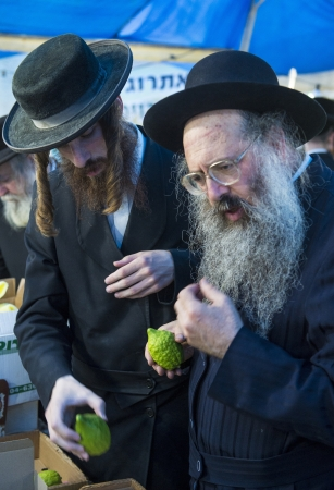raligion: JERUSALEM - SEP 28 : An ultra-orthodox Jewish men inspects an Etrog in the Four spesies market in Jerusalem Israel on September 28 2012 , Etrog is one of the Four spesies used during the celebration of Sukot