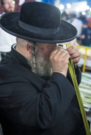JERUSALEM - SEP 28 : An Orthodox Jewish man inspects a Lulav in the Four spesies market in Jerusalem Israel on September 28 2012 , Lulav is one of the Four spesies used during the celebration of Sukot