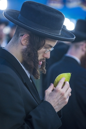 raligion: JERUSALEM - SEP 28 : An ultra-orthodox Jewish man inspects an Etrog in the Four spesies market in Jerusalem Israel on September 28 2012 , Etrog is one of the Four spesies used during the celebration of Sukot