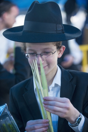 JERUSALEM - SEP 28 : Young Orthodox Jewish man inspects a Lulav in the Four spesies market in Jerusalem Israel on September 28 2012 , Lulav is one of the Four spesies used during the celebration of Sukot