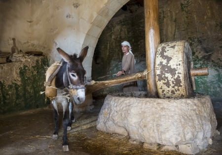 NAZARETH, ISRAEL - OCT 15 : Millstone & donkey used for pressing olives to make olive oil in October 15 2012 at Nazareth Village, a historical re-creation of Nazareth as it was at the time of Christ Stock Photo - 16532499