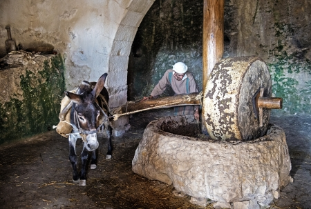 NAZARETH, ISRAEL - OCT 15 : Millstone & donkey used for pressing olives to make olive oil in October 15 2012 at Nazareth Village, a historical re-creation of Nazareth as it was at the time of Christ Stock Photo - 16768322
