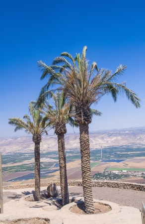 Palm trees and a view To Jordan Valley From Ruins Of The Crusader Fortress Belvoir In Lower Galilee, Israel photo