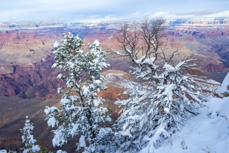 The Grand canyon national park in snow photo