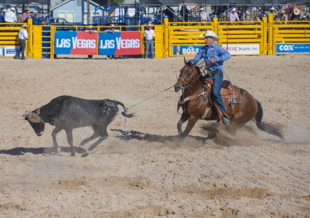 arena rodeo: LAS VEGAS - MAY 17 : Cowboy Participant in a Calf roping Competition at the Helldorado Days Professional Rodeo in Las Vegas , USA on May 17 2013  Editorial