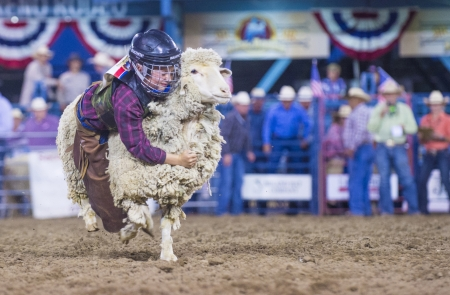 reno: RENO , USA - JUNE 30 : A boy riding on a sheep during a Mutton Busting contest at the Reno Rodeo a Professional Rodeo held in Reno Nevada , USA on June 30 2013