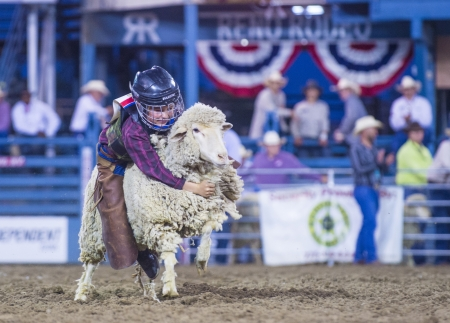busting: RENO , USA - JUNE 30 : A boy riding on a sheep during a Mutton Busting contest at the Reno Rodeo a Professional Rodeo held in Reno Nevada , USA on June 30 2013