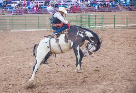 GALLUP , NEW MEXICO - AUGUST 10 : Cowboy Participates in a Bucking Horse Competition at the 92nd annual Indian Rodeo in Gallup, NM on August 10 2013