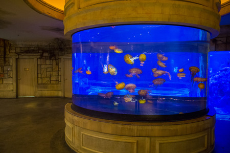 gallons: LAS VEGAS - MAY 12 : The Shark Reef Aquarium at Mandalay Bay hotel and casino in Las Vegas on May 12 , 2014. The Shark Reef Aquarium is comprised of nearly 1.6 million gallons of water.