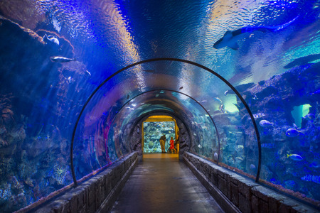 LAS VEGAS - MAY 12 : The Shark Reef Aquarium at Mandalay Bay hotel and casino in Las Vegas on May 12 , 2014. The Shark Reef Aquarium is comprised of nearly 1.6 million gallons of water.