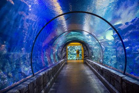 comprised: LAS VEGAS - 12 maggio: The Shark Reef Aquarium all'hotel Mandalay Bay e casin� di Las Vegas il 12 maggio, 2014 La Shark Reef Aquarium � composto da circa 1,6 milioni di litri d'acqua.
