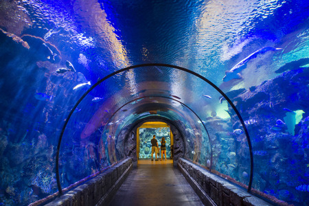 gallons: LAS VEGAS - MAY 12 : The Shark Reef Aquarium at Mandalay Bay hotel and casino in Las Vegas on May 12 , 2014. The Shark Reef Aquarium is comprised of nearly 1.6 million gallons of water.