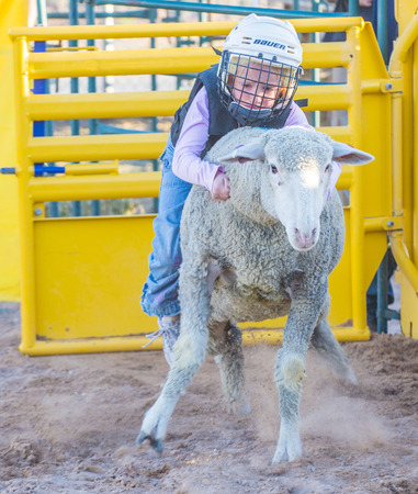 busting: LOGANDALE , NEVADA - APRIL 10 : A boy riding on a sheep during a Mutton Busting contest at the Clark County Fair and Rodeo a Professional Rodeo held in Logandale Nevada , USA on April 10 2015 Editorial