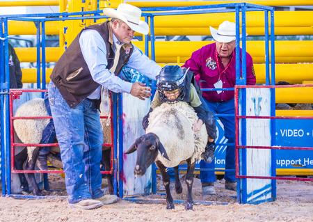 busting: LAS VEGAS - MAY 16 : Children Participating in a Mutton Busting contest at the Helldorado days Rodeo , A Professional Rodeo held in Las Vegas , Nevada on May 16 2015