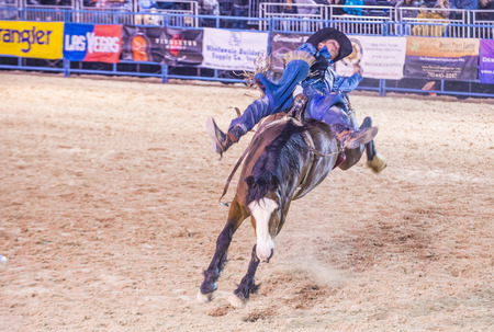 bucking horse: LAS VEGAS - MAY 16 : Cowboy Participating in a Bucking Horse Competition at the Helldorado days Rodeo , A Professional Rodeo held in Las Vegas on May 16 2015
