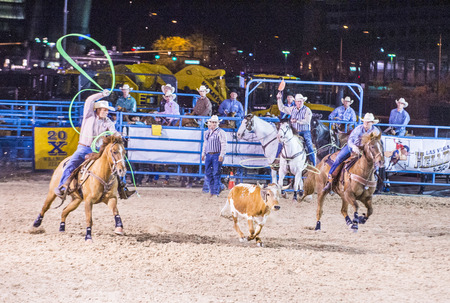arena rodeo: LAS VEGAS - MAY 16 : Cowboys Participating in a Calf roping Competition at the Helldorado days Rodeo , A Professional Rodeo held in Las Vegas, Nevada on May 16 2015 Editorial
