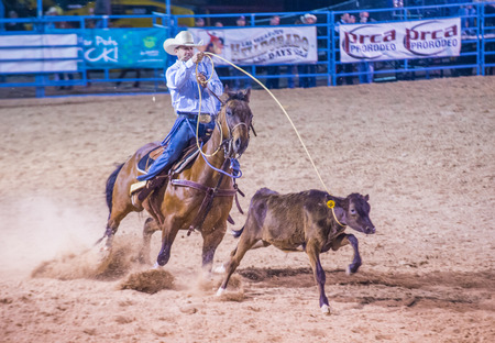 arena rodeo: LAS VEGAS - MAY 16 : Cowboy Participating in a Calf roping Competition at the Helldorado days Rodeo , A Professional Rodeo held in Las Vegas, Nevada on May 16 2015 Editorial