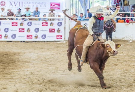 GUADALAJARA , MEXICO - SEP 01 : Charro Participates in a bull riding Competition at the 23rd International Mariachi & Charros festival in Guadalajara Mexico on September 01 , 2016. Editorial