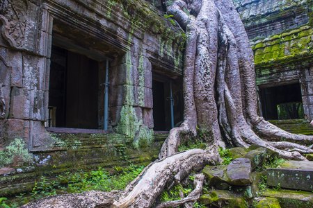 SIEM REAP , CAMBODIA - OCT 15 : The Ta Prohm temple in Angkor Thom, Siem Reap Cambodia on October 15 2017 , Angkor Thom was the last and capital city of the Khmer empire. Banque d'images - 117820236