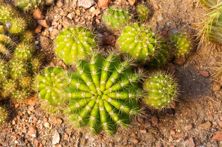Macro top of cactus , Thailand. Stock Photo