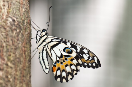 Beautiful butterfly on the tree, Thailand.