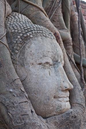 Head of buddha in root, Ayuthaya province, Thailand. photo