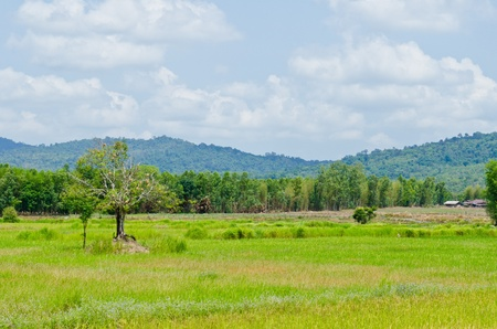 Green field with blue sky, Thailand. photo